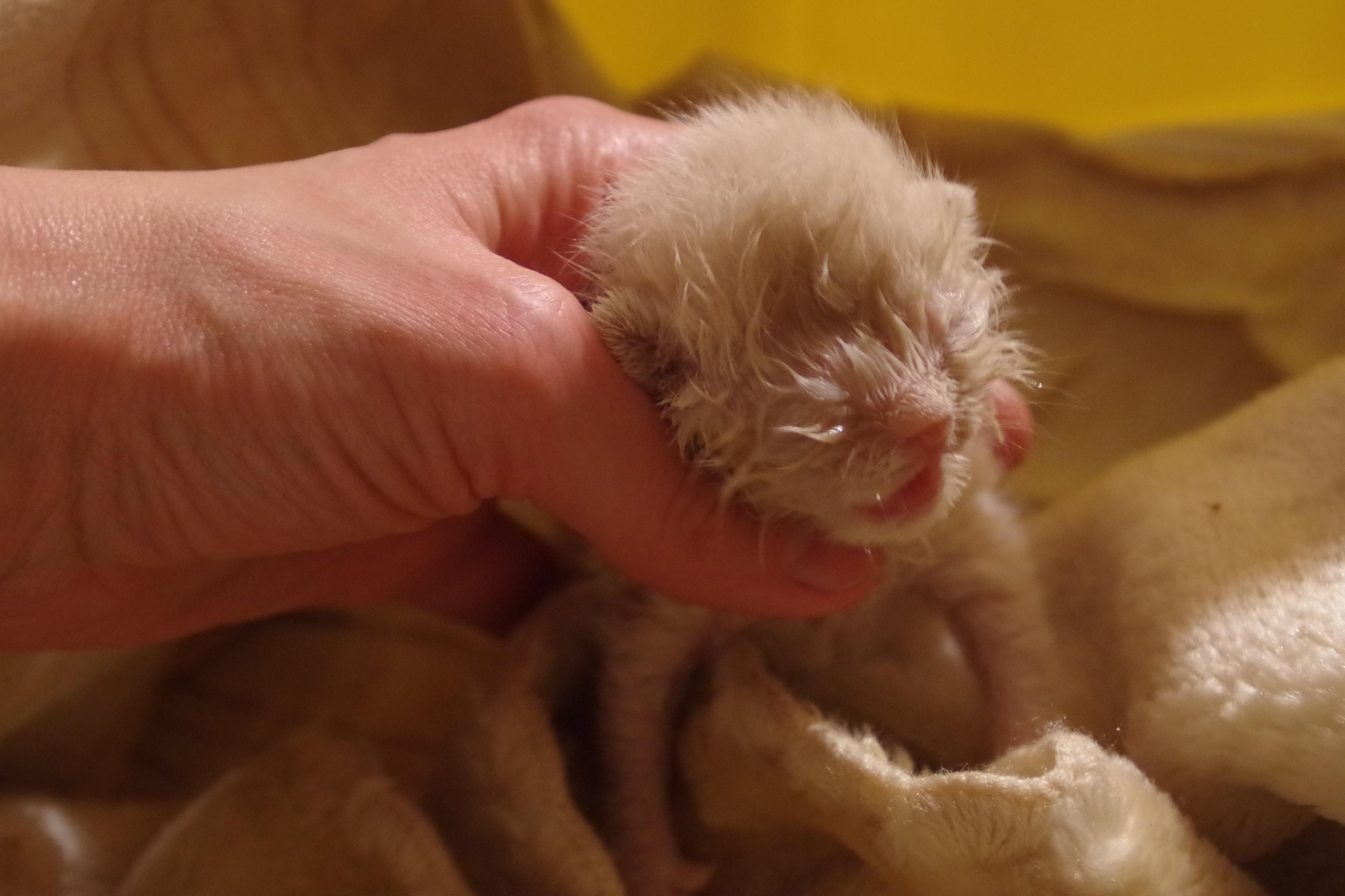 centrum leczenia zwierząt koci osesek