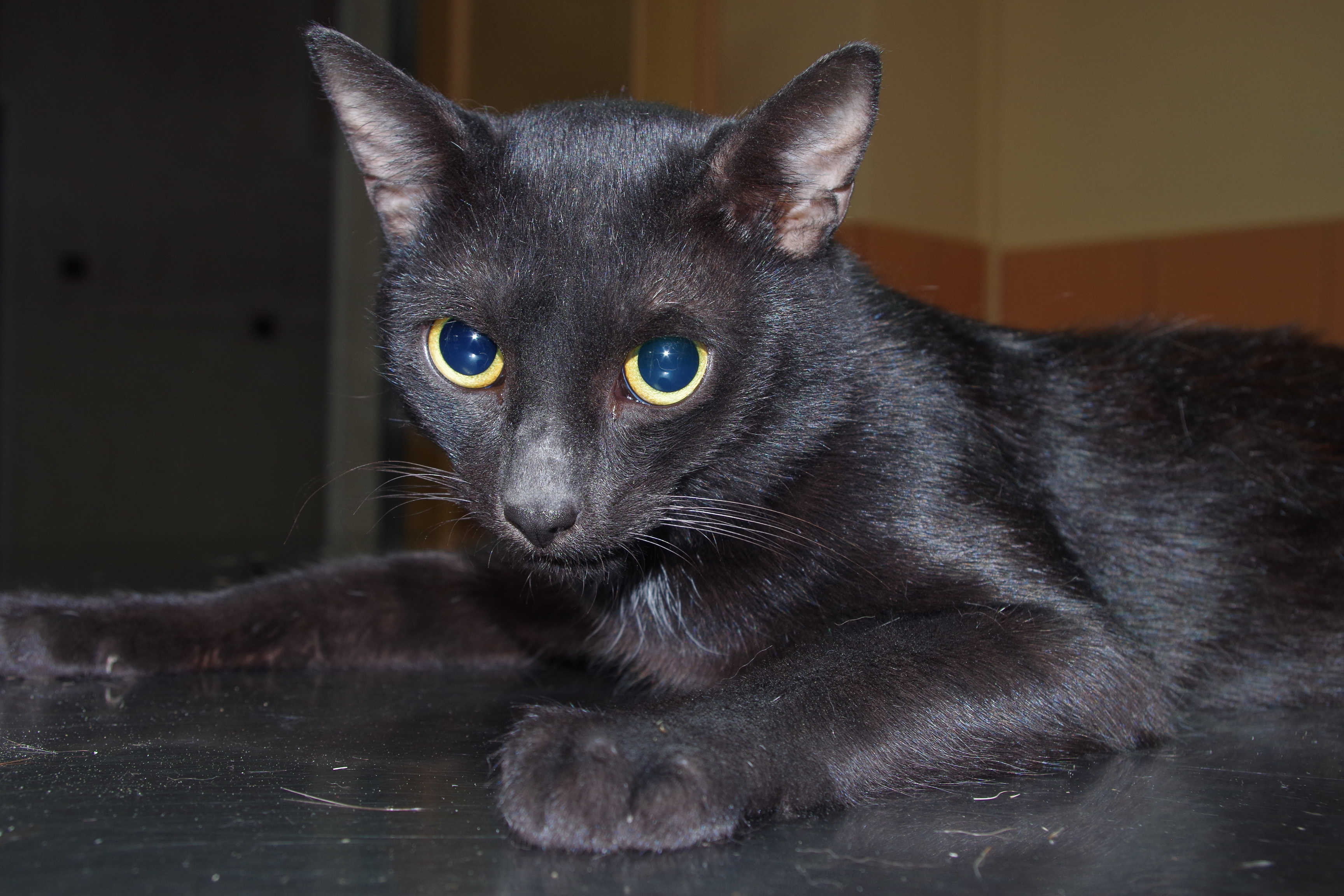 centrum leczenia zwierząt kastracja kota