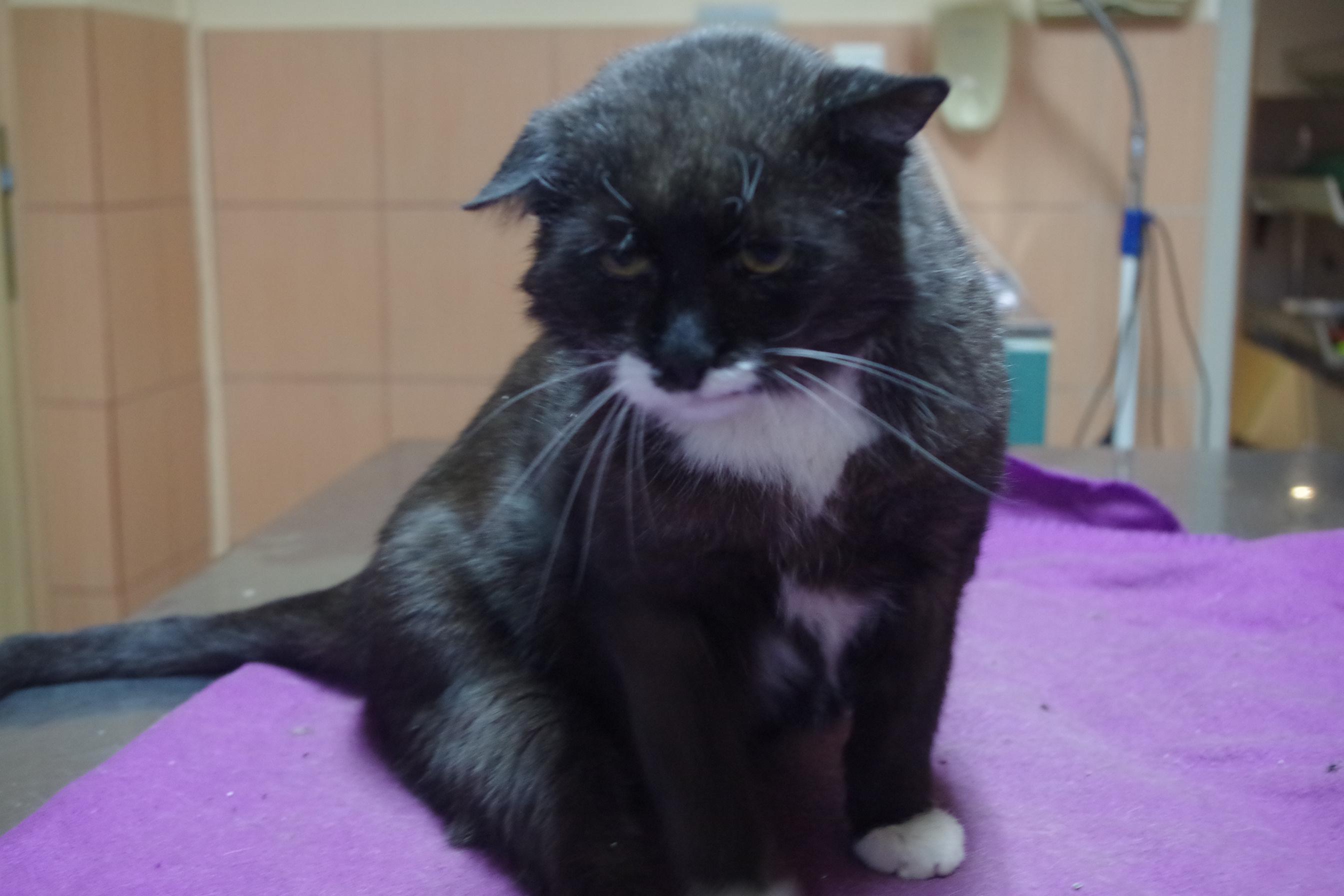 centrum leczenia zwierząt opiekujemy się starym kotem
