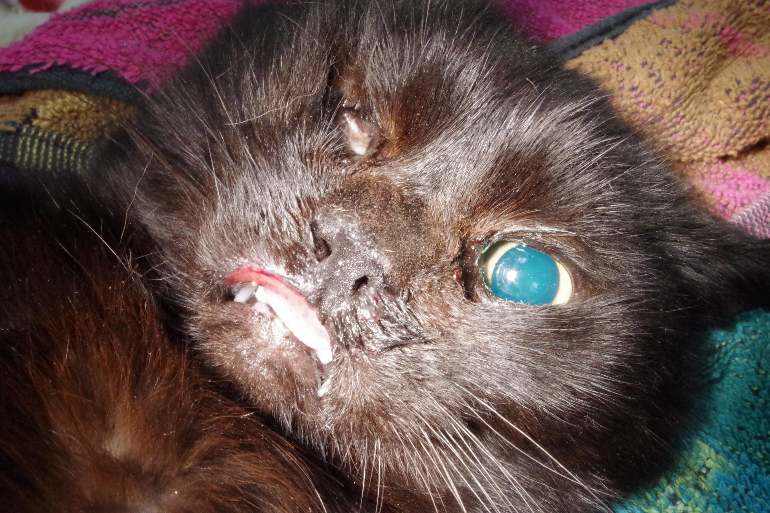 kot-leczony-fundacja