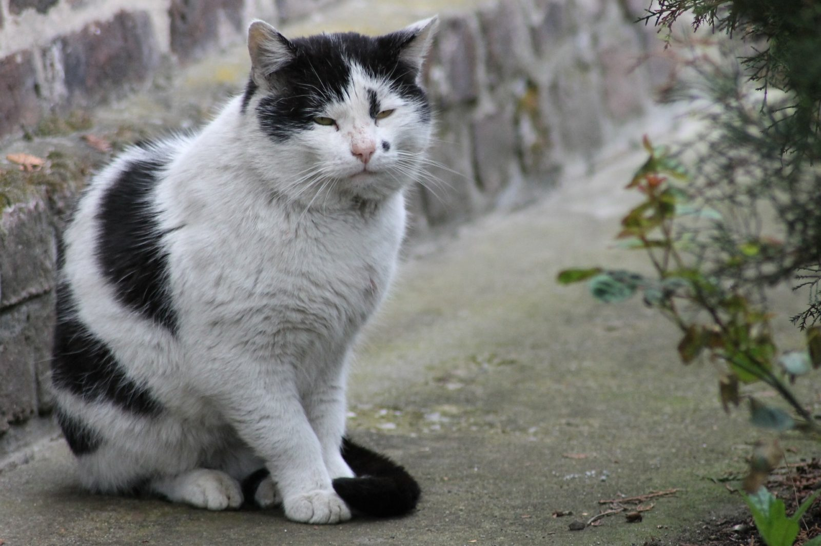 stary schorowany kot wfundacji