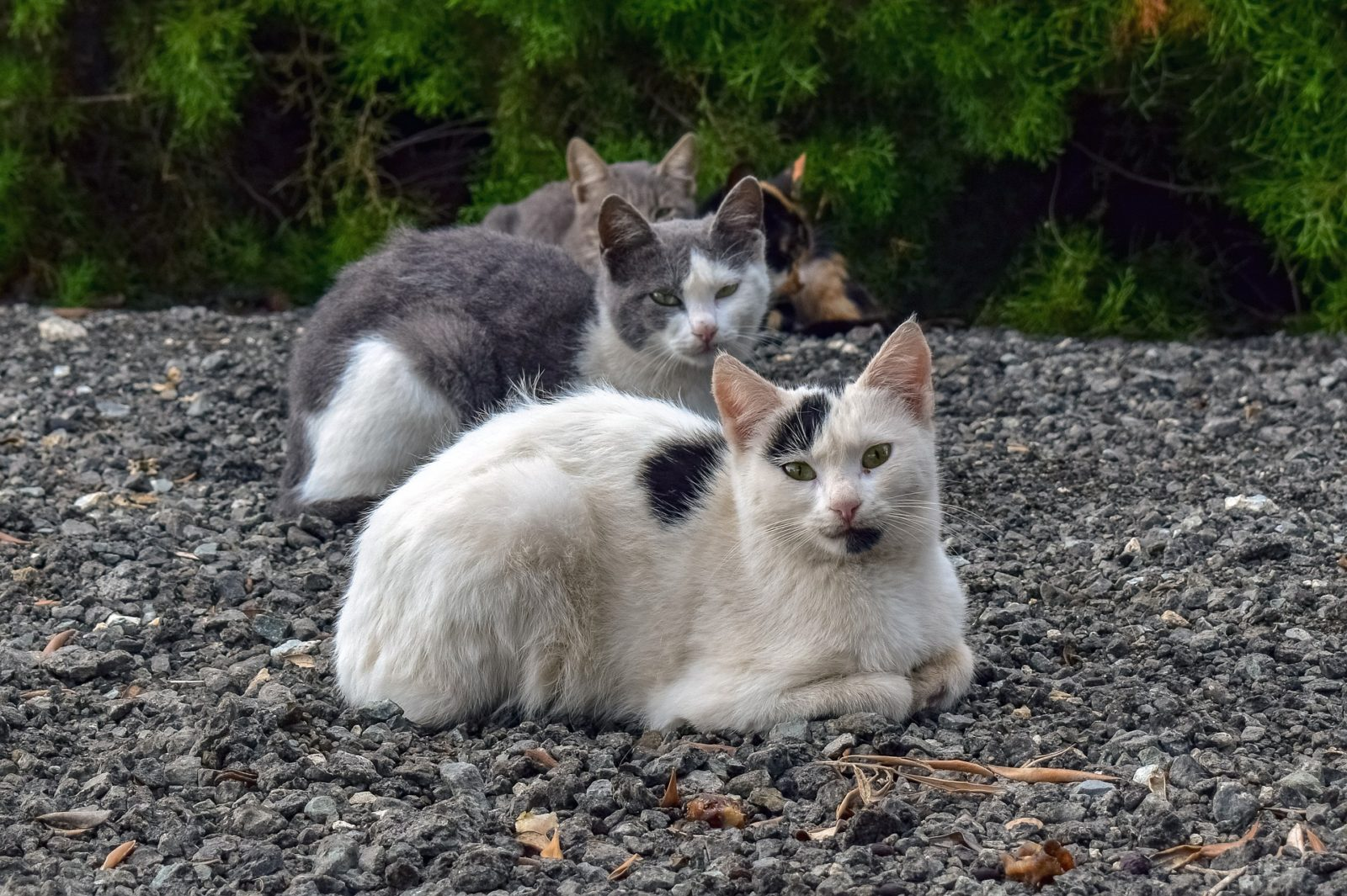 koty wygrzewają się wsłońcu onas