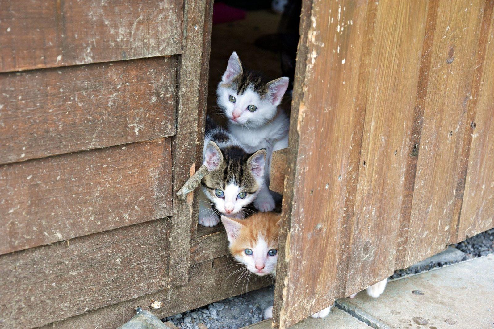 trzy koty bezdomne nawsi