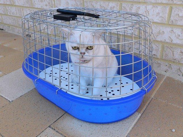 wizyta-u-lekarza-weterynarii-kot