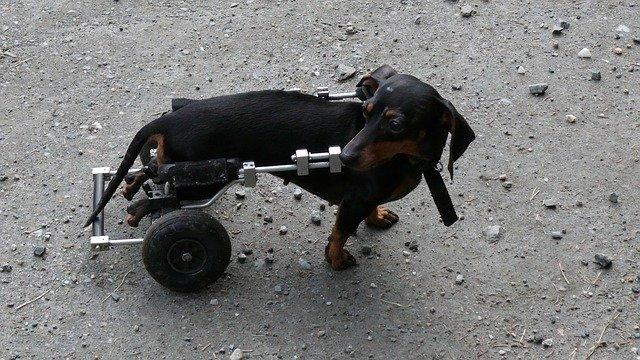 co-robimy-leczenie-rehabilitacja-zwierząt