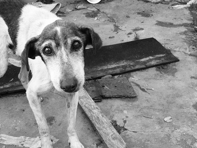 fundacja-pomocy-zwierzętom