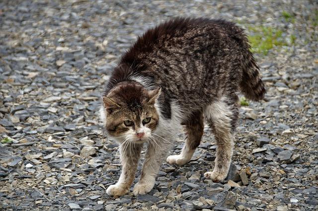 agresja-i-strach-u-kotów