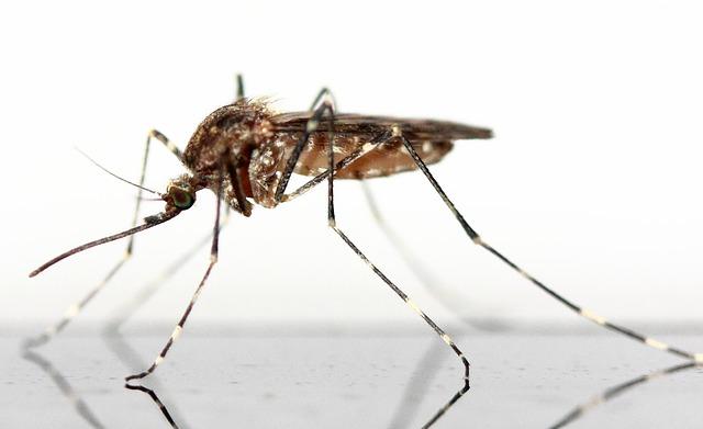 użądlenia-owadów-komar