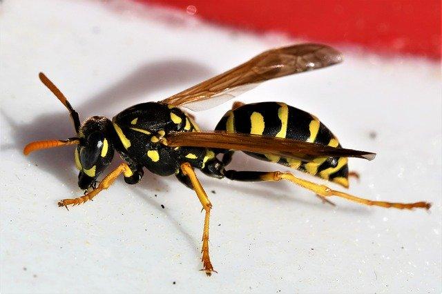 pierwsza-pomoc-użądlenia-owadów