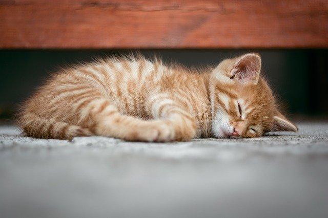 choroby wirusowe kotów
